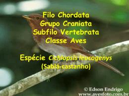 Classe Aves Morf Interna