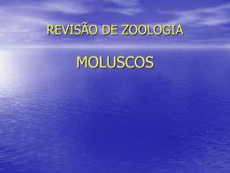 REVISÃO DE ZOOLOGIA.moluscos
