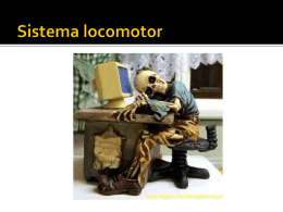 Sistema Locomotor (prof Diandri) 3ºs EM