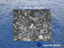 A vida das amêijoas - À descoberta da Beira Mar