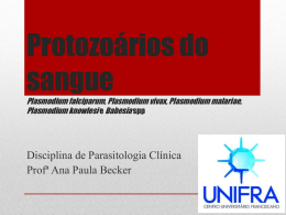 Protozoários do sangue Plasmodium falciparum