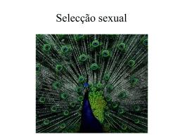 Selecção sexual