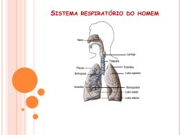 sistema respiratório do homem