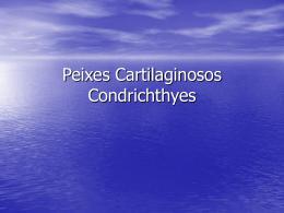 123404040914_Peixes_Cartilaginosos
