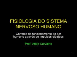 sistema-nervoso