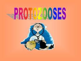 Protozooses - Colégio Machado de Assis