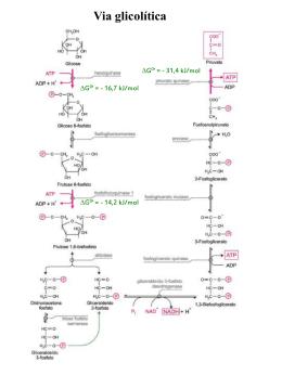 frutose 2,6-bisfosfato