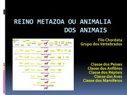 Reino Metazoa ou dos Animais