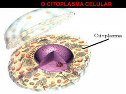 o citoplasma celular