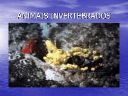 ANIMAIS INVERTEBRADOS