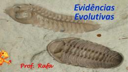 Registros Fósseis Definição