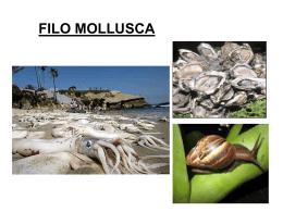 FILO MOLLUSCA - Colégio Juvenal de Carvalho
