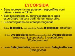Lycopsida - Apresentação