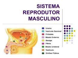 Sistema reprodutor masc. e feme..