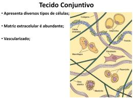 Divisão do Tecido Conjuntivo