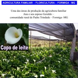 flores da agricultura familiar estão disponíveis para a venda em