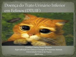 Doença do Trato Urinário Inferior em Felinos (DTUIF)