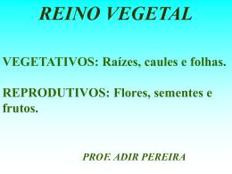 Organologia_Vegetal_TIPOS_VEGETAIS_turma_201