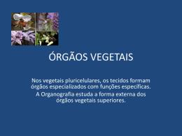 ÓRGÃOS VEGETAIS