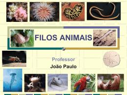 FILOS ANIMAIS Professor João Paulo FILO PORIFERA