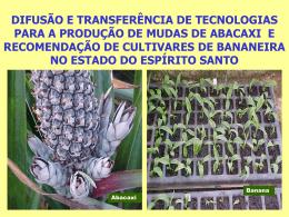 difusão e transferência de tecnologias para a produção de mudas