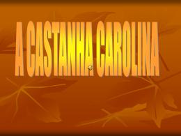 Oh! Uma castanha saiu do ouriço, acho que te vou chamar Carolina.