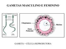 Estudo dos cromossomos