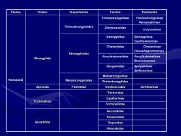 Ordem Strongylida