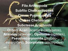 Subfilo Cheliceriformes Ordem Aranae Acari