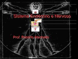 Sistema Endócrino e Nervoso