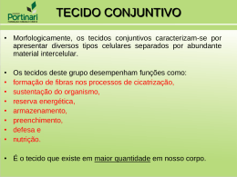 as fibras mais frequentes do tecido conjuntivo