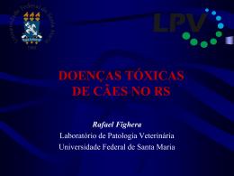 ACIDENTE COM Lycosa spp.