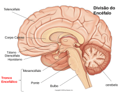 Neuroanatomia aula 2 - Anatomia