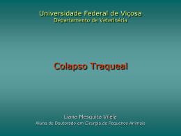 Centro Universitário Vila Velha Pós-Graduação em - GEAC-UFV