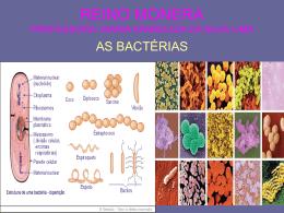 REINO MONERA, protista e fungi