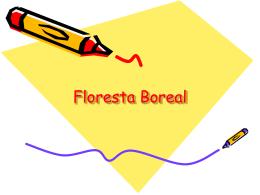 Floresta Boreal - escolafilintomuller
