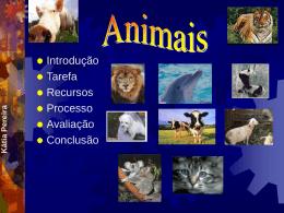 Animais Domésticos vs Animais Selvagens