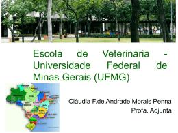 UFMG Brasil
