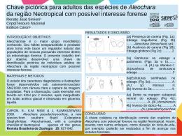 Chave pictórica para adultos das espécies de Aleochara da região