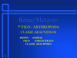 7_Filo_Artropoda_Aracnideo
