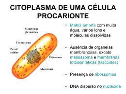 citoplasma - Marista Centro