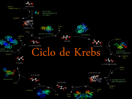 Bioquímica, Ciclo de Krebs