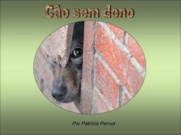Cão sem dono
