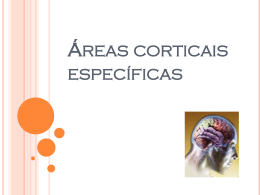areas-corticais-especificas.