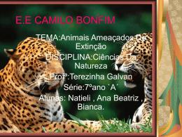Onca Pintada -Ana Beatriz,Natieli , BIanca