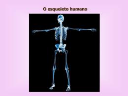Esqueleto Humano - Colégio Machado de Assis