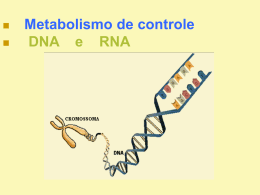 Duplicação do DNA e Síntese de Proteínas