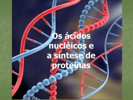 Os ácidos nucléicos e a síntese de proteínas