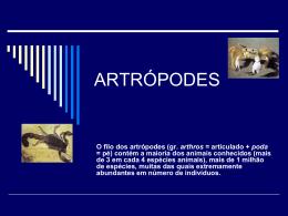 O filo dos artrópodes