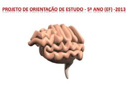 Projeto de Orientação de Estudo 3º ano (EF) -2013